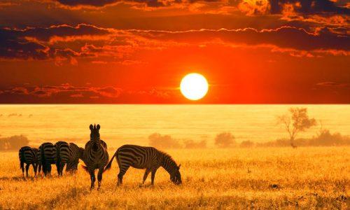 Прививки перед Африкой