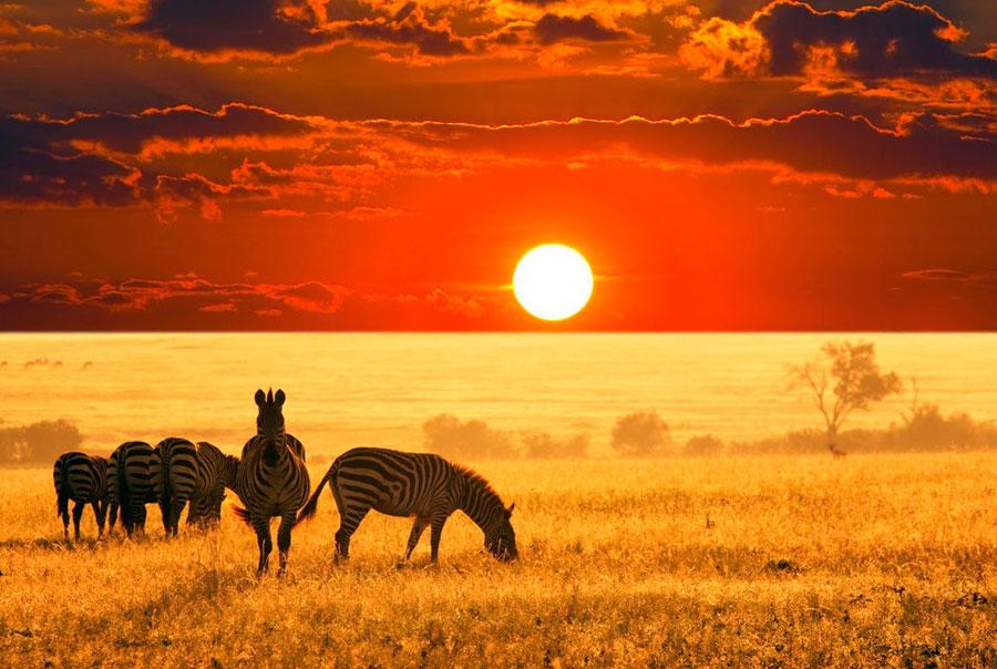 Прививки-перед-Африкой