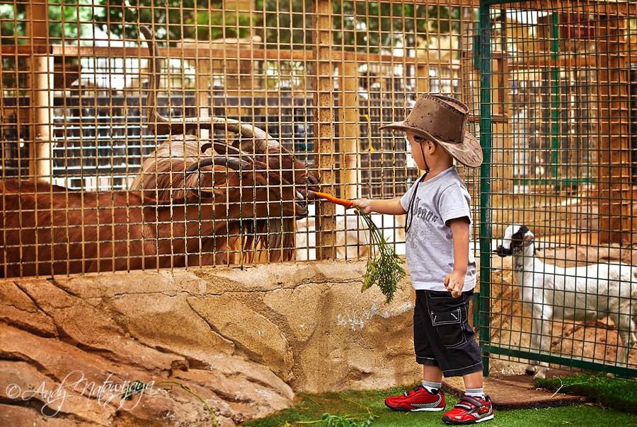 Развлечения с детьми в Дубае