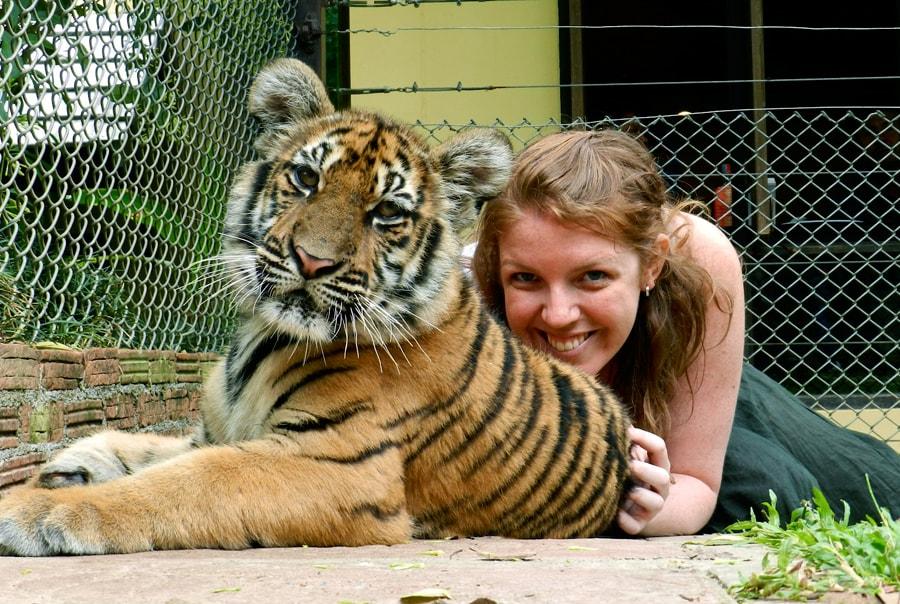 Тигриный приемник на Пхукете