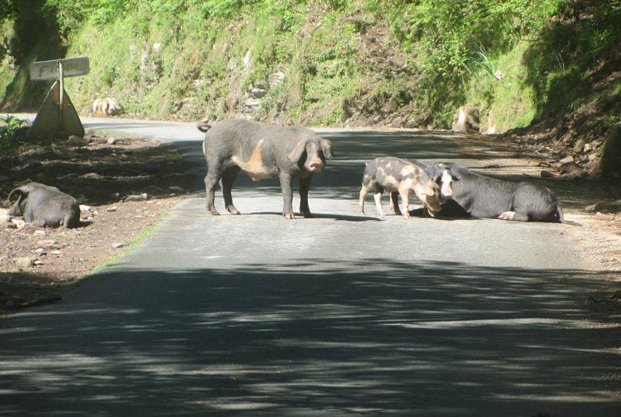Животные в Корсике