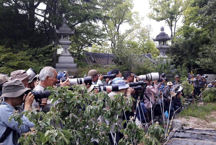 Бердвотчинг в Японии