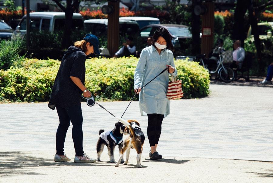 Почему японцы ходят в масках