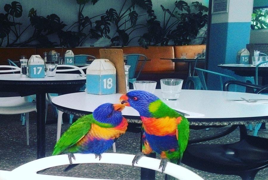 Какие животные обитают в Австралии
