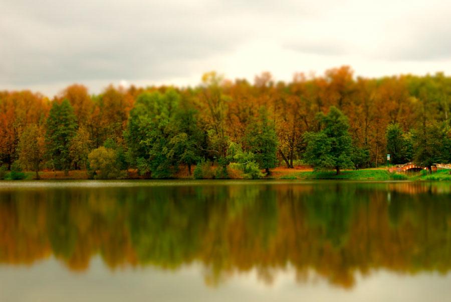 Кузьминский лесопарк осенью