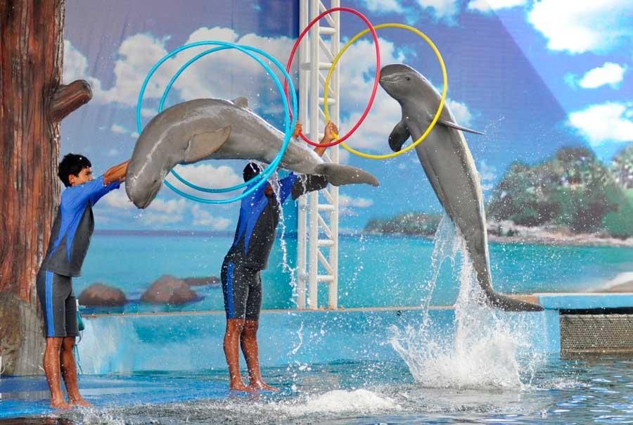 Дельфинарий Pattaya Dolphin World & Resort фото