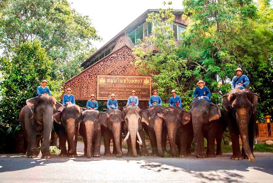 Деревня слонов фото