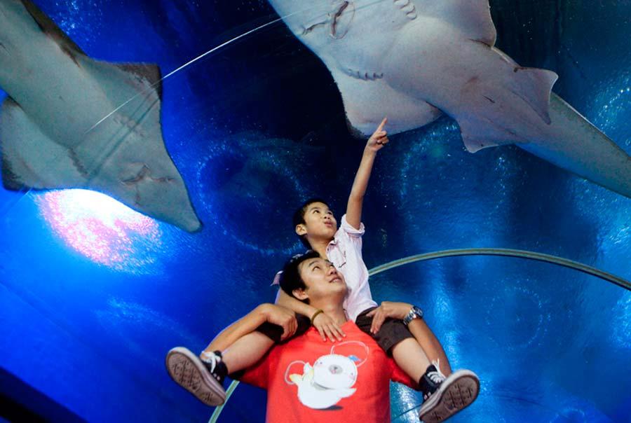 Океанариум Underwater World Pattaya фото