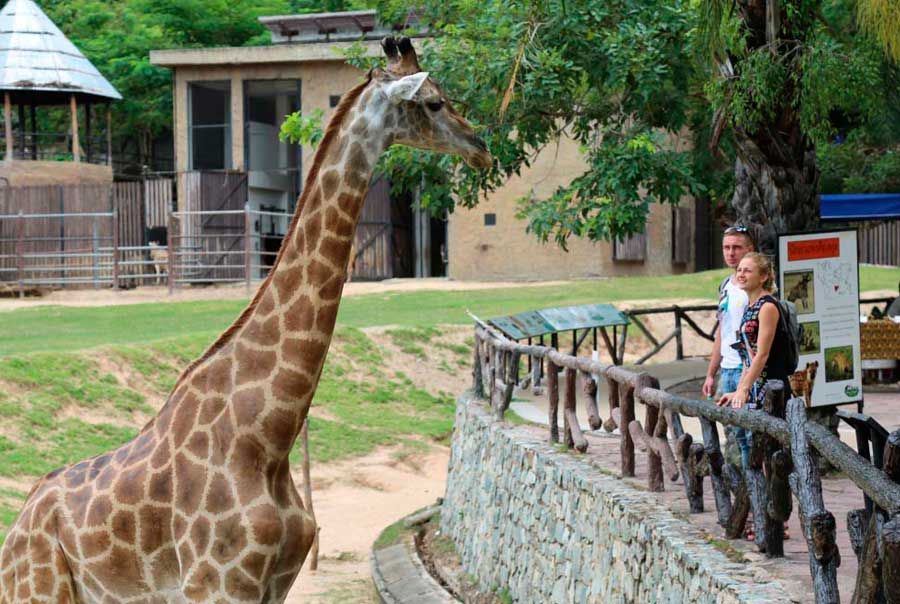 Зоопарк Кхао Кхео фото