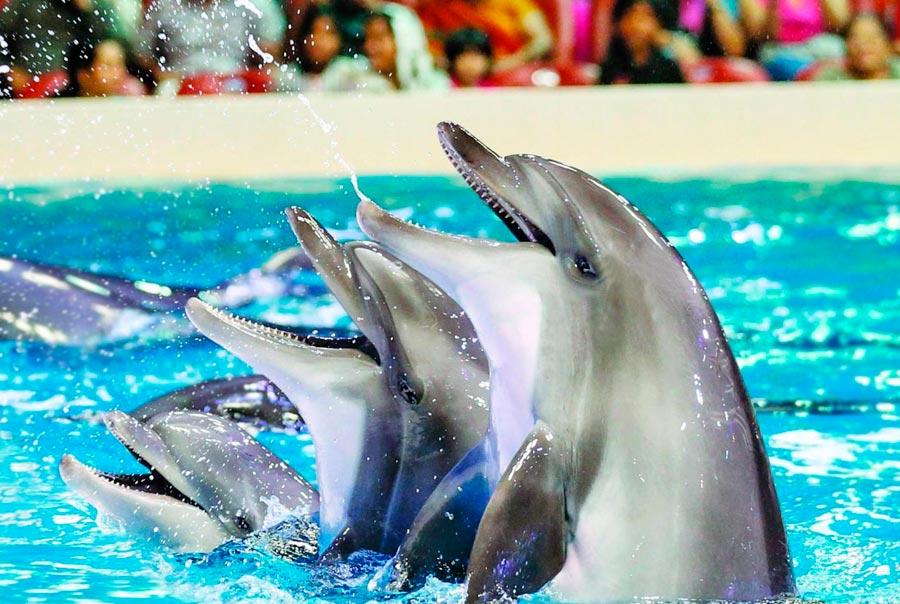 Дельфинарий на набережной Корнилова фото