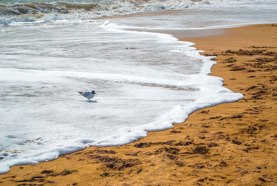 Золотые пляжи фото