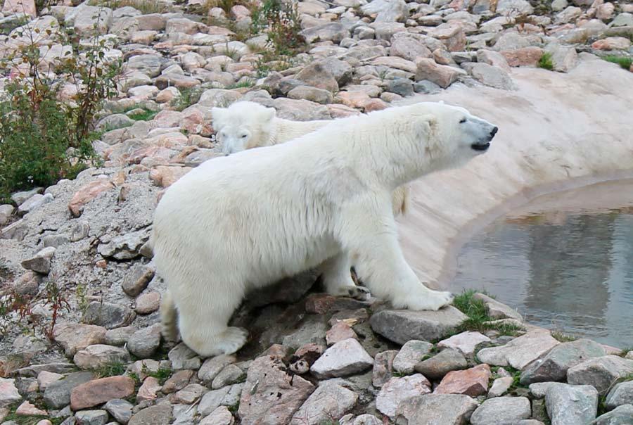 Арктический зоопарк «Рануа» фото