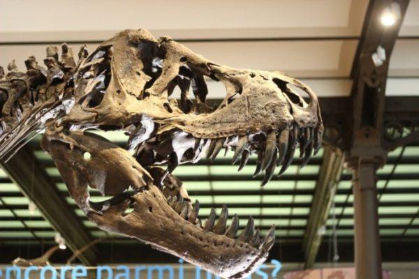 Тиранозавр в Брюсселе