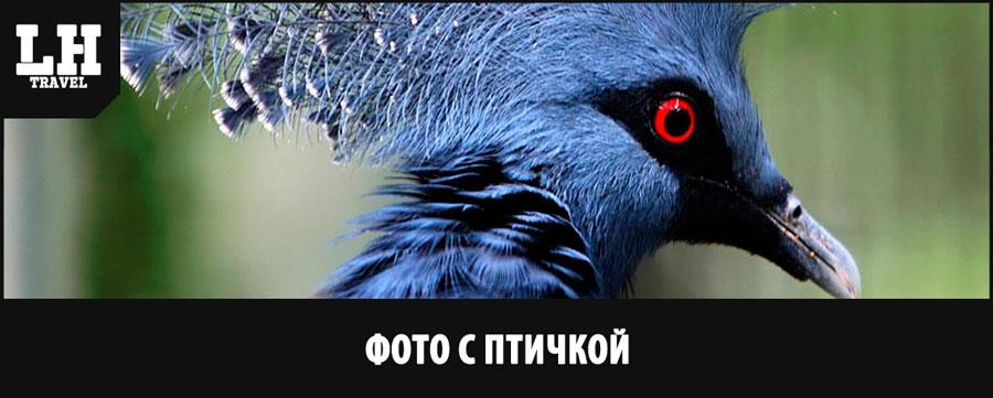 фото-с-птичкой