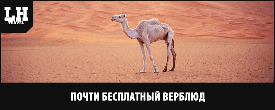 почти-бесплатный-верблюд