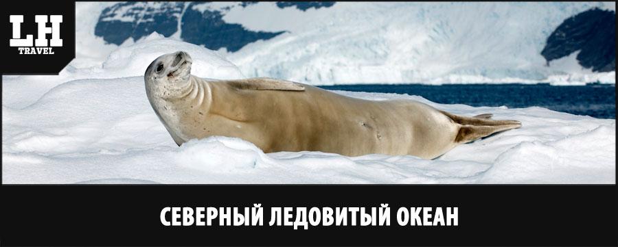 северный-ледовитый