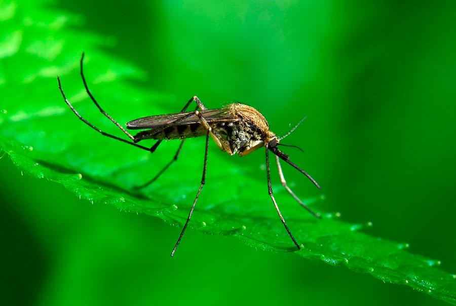 Как избавиться от комаров в походных условиях