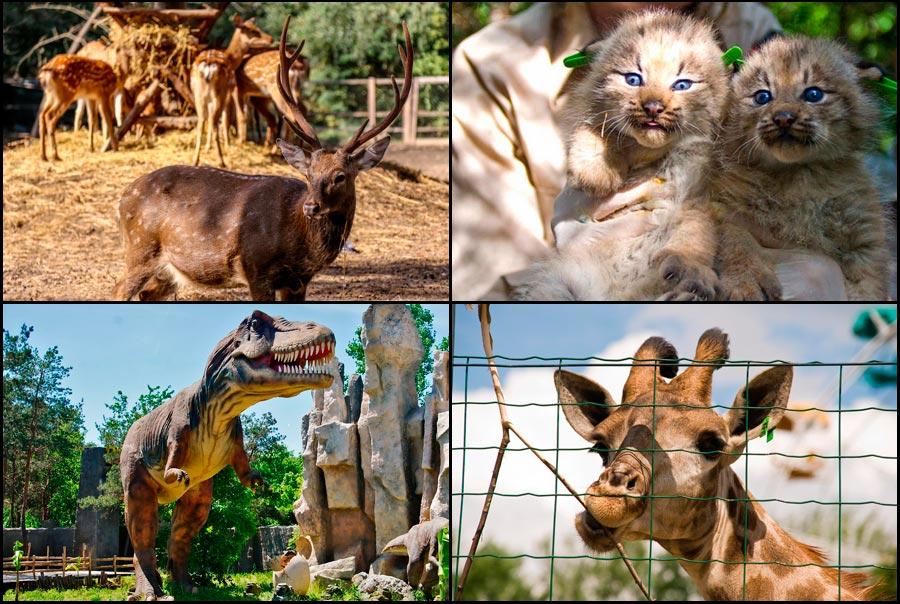 safari-park-krasnodar