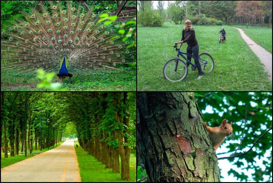 Где погулять в Краснодаре: парки, улицы, окрестности