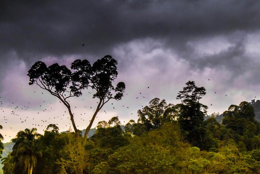 Сезон дождей в Доминикане