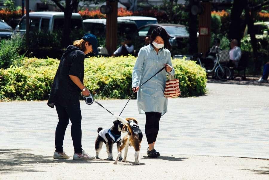 Зачем японцы носят маски