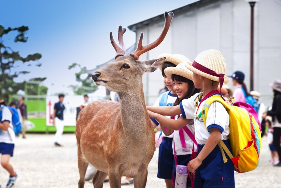 Нара — город, где живут олени