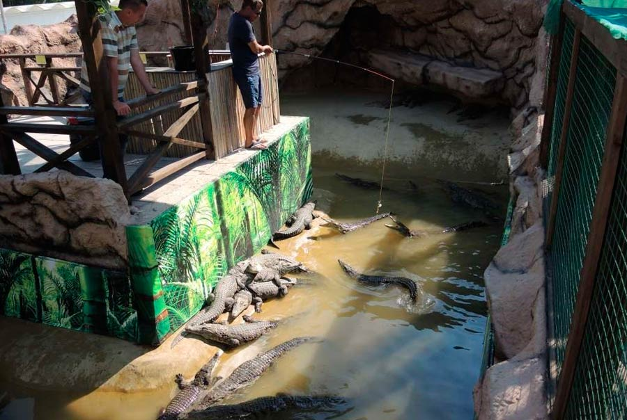 Крокодиловая ферма: фото