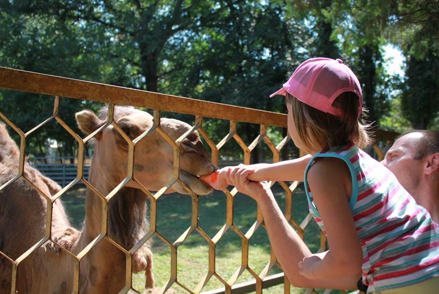 Зоопарк «Лукоморье»: фото