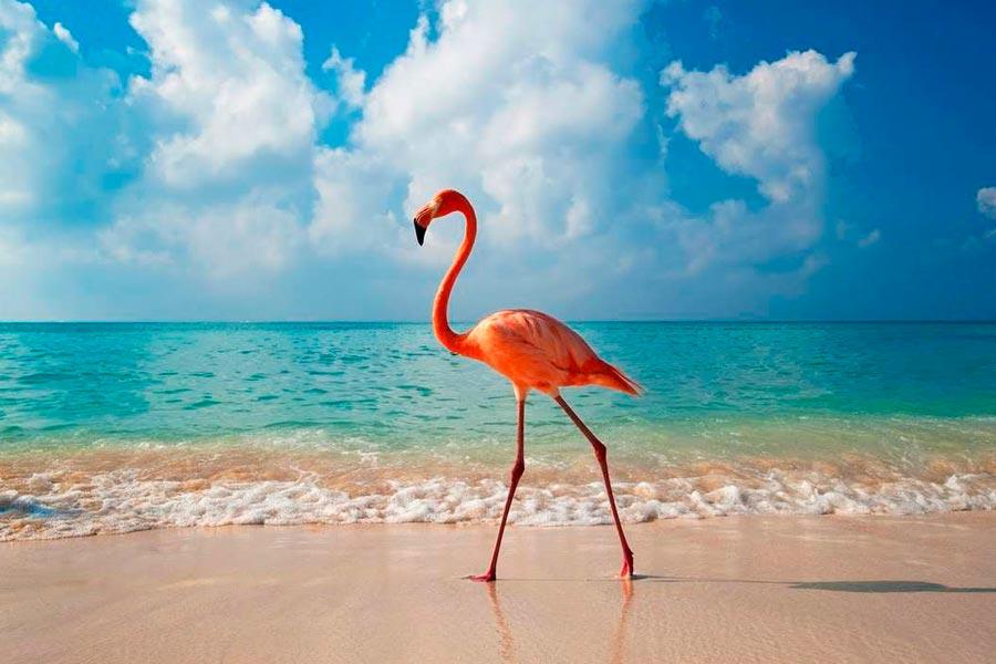 5 главных курортов Доминиканской Республики