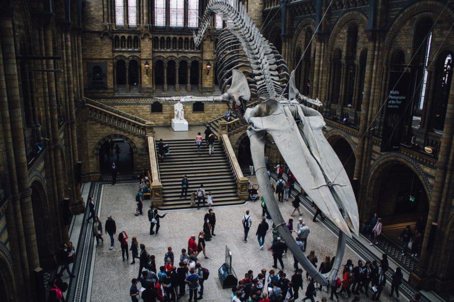 История кита из Музея Естествознания в Лондоне